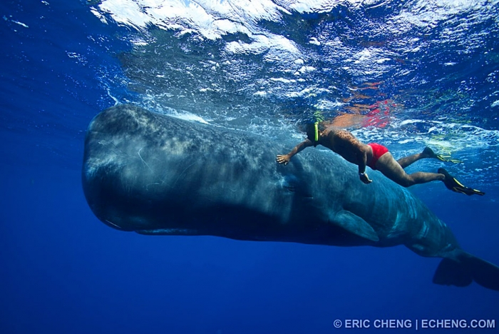 Eric Echeng swims with sperm whales in Dominica