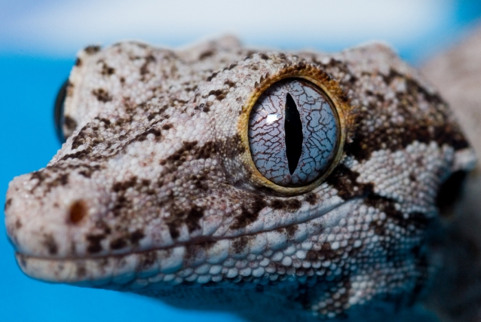 'Eye of the Gecko' by Bal Soora